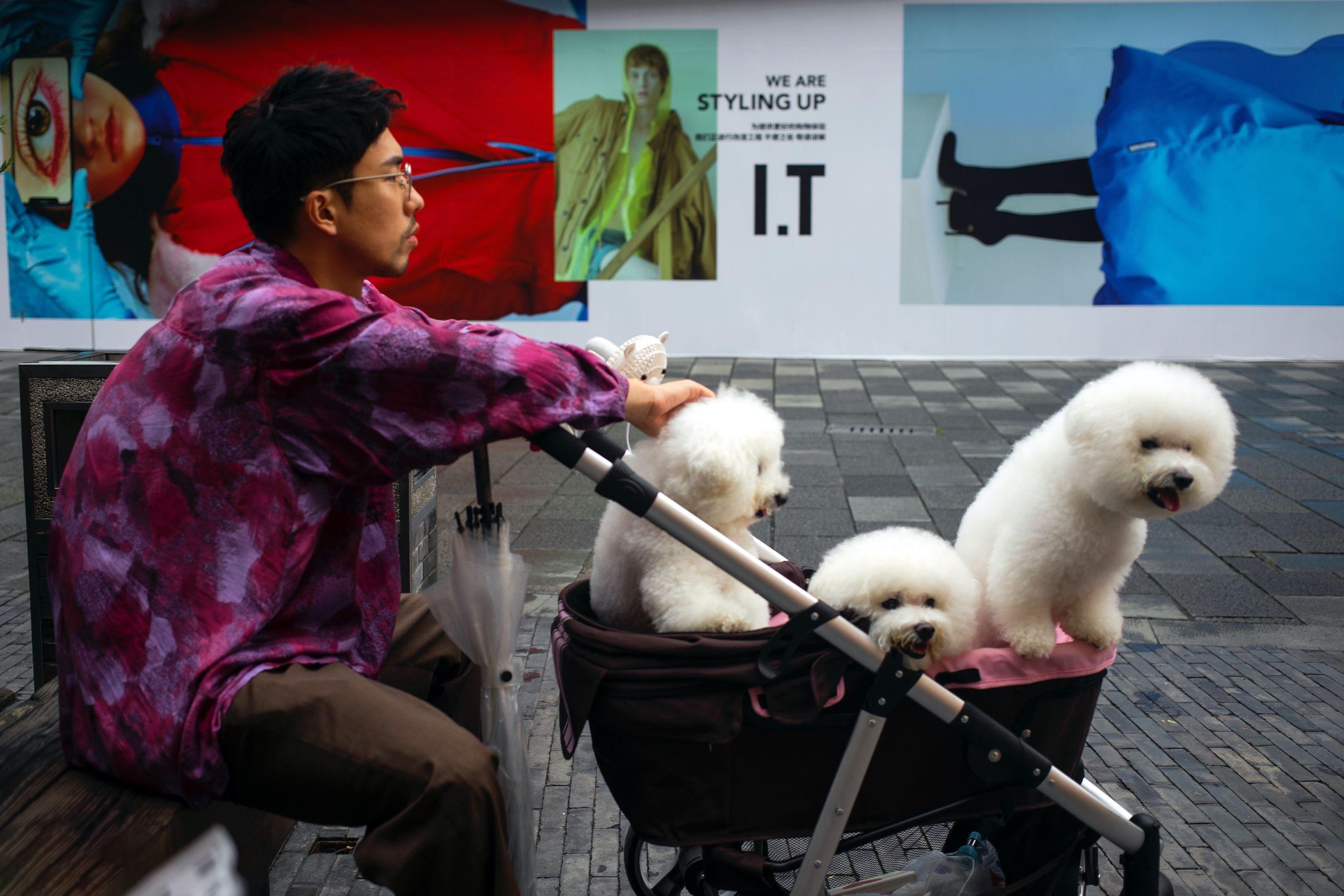 Den extraordinära ökningen av Kinas husdjursindustri - China Business Review